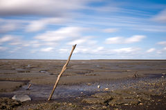 Wide beach at low tide. Scenic view of wide dark sandy beach at low tide with blue sky and cloudscape background Stock Photography