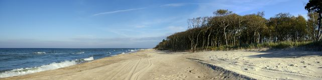 Wide beach panorama. Empty beach, interesting trees at the right. No people, some tyre (tire) marks on the sand Stock Image