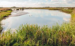 Wide Biesbosch creek with swimming water birds. Reflecting wide creek in the old and untouched Dutch nature reserve De Biesbosch with swimming water fowls. The royalty free stock photos