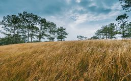 Wide Brown Grass Field Surrounded by Trees Stock Photo