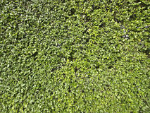 Wide bush texture Stock Image