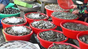 Wide choice of seafood in the market in Vietnam. Allsorts of seafood on counters of the street market. stock video footage