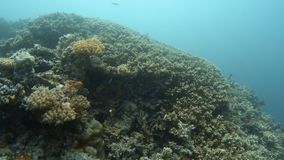 A wide coral reef shot. A wide shot of a coral reef. A tracking shot forward stock video