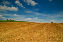 Wide cornfield. A wide cornfield ends up somewhere in the sky Royalty Free Stock Images
