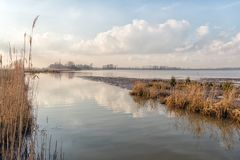 Wide creek in a Dutch nature reserve. Wide view of a creek in Dutch National Park De Biesbosch. It is winter, the high water level is gradually declining and Stock Photo