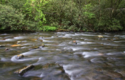 Wide Creek and Spring Growth Stock Image