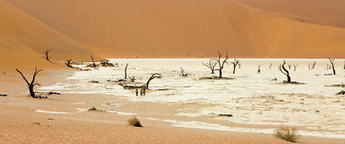 Wide-cropped view of the Deadvlei salt pan and petrified trees in the Sossusvlei Wildlife Reserve in Namibia. Royalty Free Stock Photography