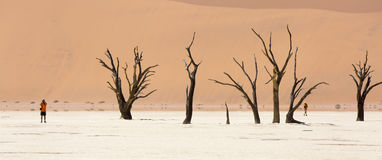 Wide-cropped view of the Deadvlei salt pan and petrified trees in the Sossusvlei Wildlife Reserve in Namibia. Royalty Free Stock Photos