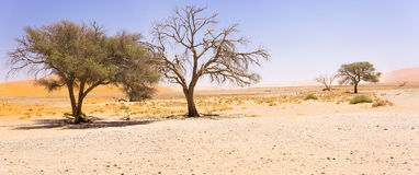 Wide-cropped view of the desert landscape, along with some hardy trees, in the middle of the Sossusvlei Wildlife Reserve in Namibi. The Sossusvlei Wildlife Stock Photos