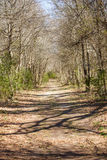 Wide Dirt Path Through Winter Woods Stock Photography