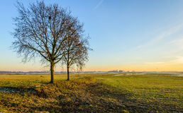Wide Dutch polder landscape in autumn. Two bare trees with whimsically shaped branches in a wide polder landscape in the Netherlands. It is autumn now Royalty Free Stock Image