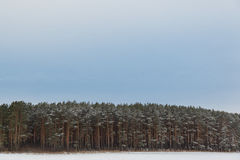 Wide empty panoramic background landscape with coastal forest in winter season Stock Photos