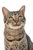 Wide eyed cat. Wide eyed curious happy cat Stock Images
