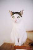 Wide-eyed cat Stock Images