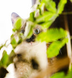 Wide-eyed kitten hidden behind plant Royalty Free Stock Image