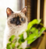 Wide-eyed kitten and plant Stock Photo