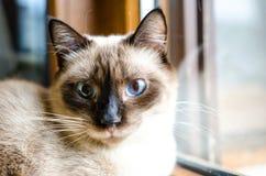 Wide-eyed kitten Royalty Free Stock Photo