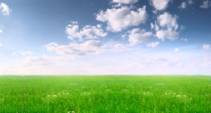 Wide field and blue sky. Summer landscape: a wide field and blue sky. Russia, July Royalty Free Stock Images