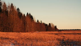 Wide field and at the left the wood from dry trees stock footage