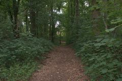 Wide field path, hemmed in by trees and bushes, that leads into a forest. Wide field path, enclosed by trees and bushes, which leads into a rich, green Stock Photos