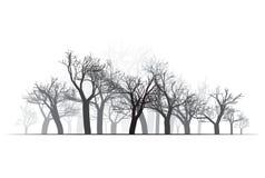 Wide Forest Background - vector illustration vector illustration