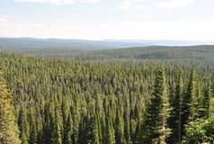 Forest overlook, Yellowstone National Park, Wyoming. stock photo