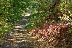 Wide forest path. Beautiful summer forest. Forest plants Stock Photos