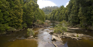 Wide Forest River. A wide, remote river with lush jungle either side stock photo