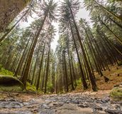 Wide forest view of high trees Stock Images
