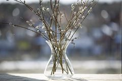 A wide glass vase with flowering willow branches stock image