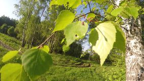 Tree leaves, forest and field. Wide GoPro movement video: Tree leaves, green field and forest on sunny day stock footage