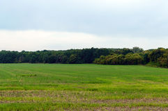 Wide green field, away dense forest. Dark sky before a thunderstorm. Landscape Stock Photos