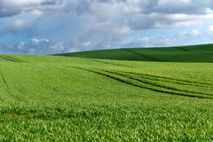 Wide green field and blue sky with clouds Royalty Free Stock Photos