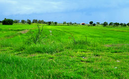 Wide green field Royalty Free Stock Photo