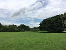 Wide green field and tree. Good weather and cloudy sky royalty free stock image