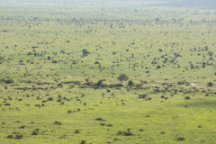 Wide and green landscape view of Kruger National Park stock photo