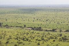 Wide and green landscape view of Kruger National Park stock photography