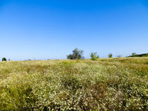 Wide green meadow Royalty Free Stock Image