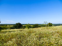 Wide green meadow Stock Images