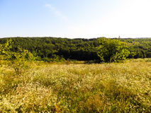Wide green meadow Royalty Free Stock Photos