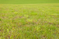 A wide green mountain pasture in Val di Funes, Italy Royalty Free Stock Image