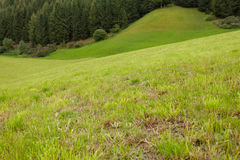 A wide green mountain pasture in Val di Funes, Italy Royalty Free Stock Images