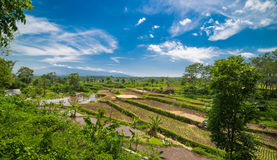 Wide green rice terraces at Bali. Wide green rice terraces at the Bali Royalty Free Stock Image