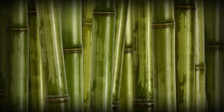 Wide hard bamboo background Royalty Free Stock Image