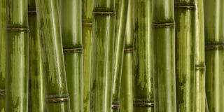 Wide hard bamboo background Stock Photography