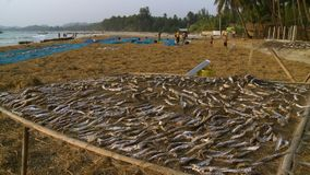 Ngapali locals drying fish at the beach, Myanmar. Wide high-angle panoramic still shot of Ngapali beach and its sea shore, local villagers, and spread fish left stock footage
