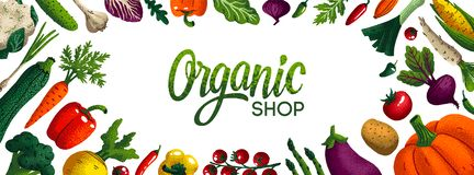 Wide horizontal organic shop background. Copy space. Variety of decorative vegetables with grain texture on white. Background. Farmers market, Organic food royalty free illustration