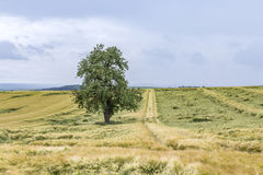 Wide landscape with some trees in the Eifel. Germany royalty free stock photo