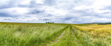 Wide landscape with some trees in the Eifel. Germany royalty free stock photos