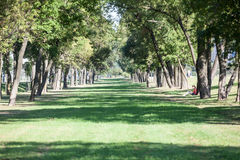 Wide lawn among the trees in city park, summer, view at the distance Stock Images